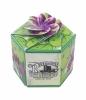 Moneyplant SeedGems Paper Planter - Biodegradable grow kit