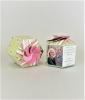 Shasta Daisy SeedGems Paper Planter - Biodegradable grow kit