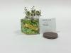 Winter Thyme Herb SeedGems Paper Planter - Biodegradable grow kit