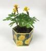 Marigold 'Lemon Gem' SeedGems Paper Planter - Biodegradable grow kit