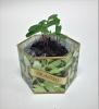 Cilantro/Coriander SeedGems Paper Planter - Biodegradable grow kit
